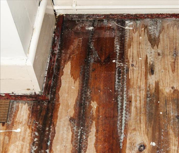 Water Damage Professional Water Damage Cleanup and Restoration